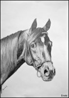 Drawing- horse head by Ennete