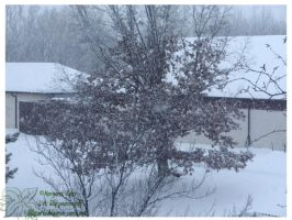 2010 5-6 02 Snow Pictures 02 by lilly-peacecraft