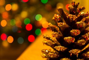 Pine Cone Bokeh by DPNPhotography