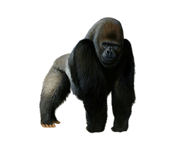 Pre-cut Gorilla by Moonglowlilly