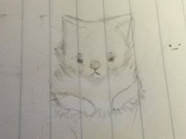 Poof Cat doodle .3. by lil-tanukii