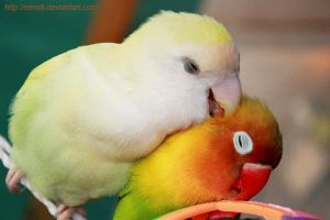 I love you, Pipo by emmil