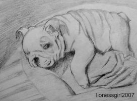 Pumba Pencil Drawing by lionessgirl2007