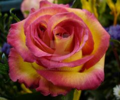 The Single Rose by charmedy