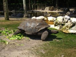 Turtle 2 of 3 by oxygenhazard