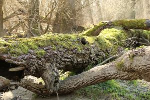 Mossy log Stock 04 by Malleni-Stock