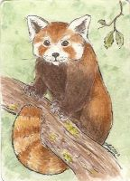 ATC Red Panda by Haawan