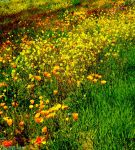 Field of summer colours by IamNasher
