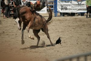 rodeo 44 by xbr0kendevotion