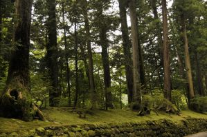 Nikko Mossy Forest by AndySerrano