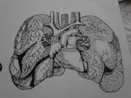 Lungs by 8thhouse