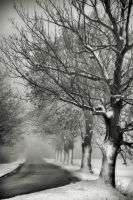 Along winter roads by tomsumartin