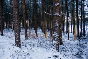 Snowy Woodland 16 by joannastar-stock