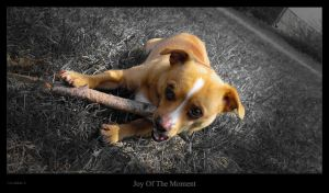 Joy Of The Moment by Pixelis