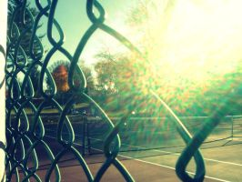 Fence Glare by pieface75
