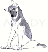 German Shepherd by Middy93