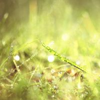 The Glistening Grass Beneath Our Feet by incolor16