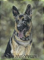 German Shepherd Portrait by Pareeeee