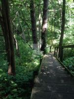Grey Squirrel Hiking Path by LuminescentEyes
