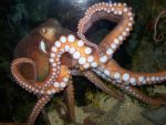 Octo-showoff-Stock by SilkenWebs