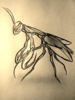 Praying Mantis sketch by AZURA-FANG