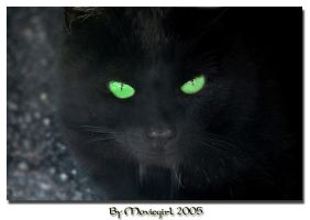 A black cat by Moviegirl