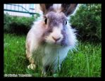 .Rabbit in grass. by KimikoTakeshita