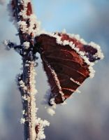 Frozen butterfly by luckylooke