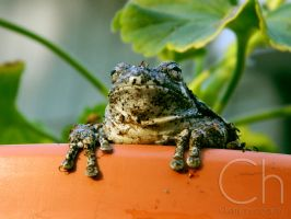 Toad 2 by Champineography