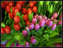 Red and Pink in Green by kanes