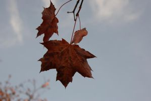 hang in there autumn by Her-Redness