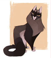 Cat Character Design by Feyrah