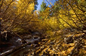 Fall creekside hideaway by CheshirePhotographer