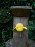 Hetalia Gilbird plushy photo 6 by Mayu-96