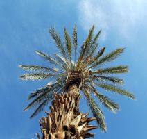 palm tree by loghry