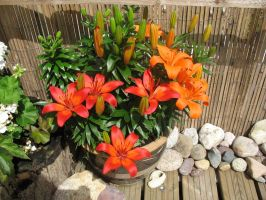lillies by RTyStock