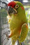 Parrot :) by Prinzess-Stock