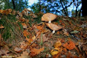 Autumn 2012 3 by jochniew