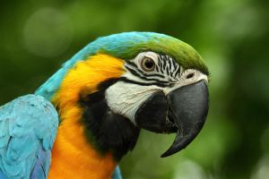 Macaw Head Shot by janernn