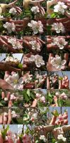 Flowers in hand for Stock 33 foto by EXOstock