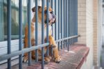 The dog in Jail by stephane-bdc