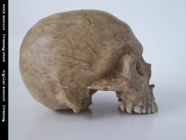 freaksmg-stock - new skull 9 by freaksmg-stock