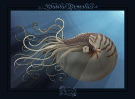 Nautilus Pompilius by Feathers-of-Love