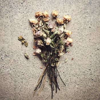 Dried Roses on Concrete - STOCK use allowed by patchoulipatch