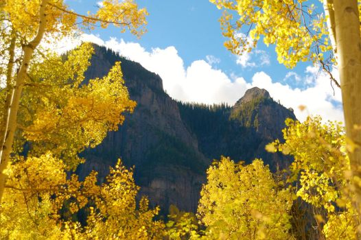 Aspen Trees Around a Mountainside by JeFr316