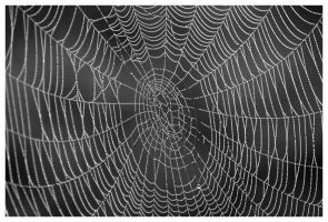 Web by Arcanacaries