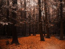 Red forest by PhotoTori