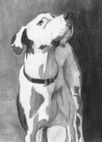 Angus by DrawingsByTony