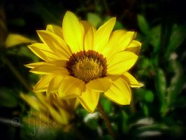 Flower_updated by dirkbenedict28
