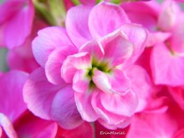 Pink Flower by ErinMariel